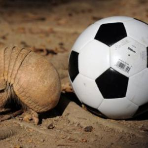 Armadillo chosen as 2014 World Cup mascot